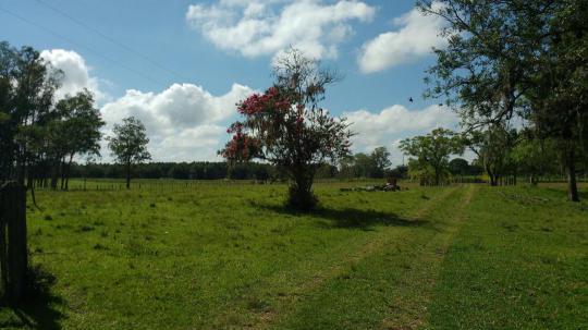Fazenda em Portão no Bairro Sanga Funda